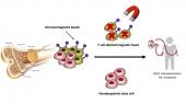 Hạt từ miễn dịch loại bỏ tế bào T ứng dụng cho cấy ghép