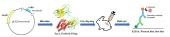 TẠO VÀ ĐÁNH GIÁ KHÁNG THỂ ĐA DÒNG KHÁNG ĐẶC HIỆU HAI ĐỘC TỐ CỦA VI KHUẨN Vibrio parahaemolyticus GÂY BỆNH HOẠI TỬ GAN TỤY CẤP (AHPND) TRÊN TÔM