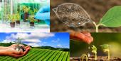 THÔNG BÁO TUYỂN SINH VIÊN LÀM KHÓA LUẬN TỐT NGHIỆP (2021 - 2022) TẠI PTN. CNSH THỰC VẬT (Phòng B23 và Trại thực nghiệm)
