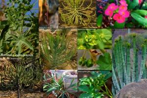 PTN Thực vật