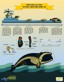 [Infographic] Tiến hóa cá voi: Từ đất liền lên biển cả