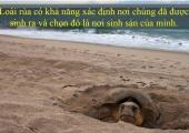 [Điểm tin] Khả năng đặc biệt của rùa
